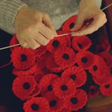 Woman`s Hands Knitting Poppies F for Charity Royalty Free Stock Images