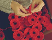 Woman`s Hands Knitting Poppies H for Charity Royalty Free Stock Photos