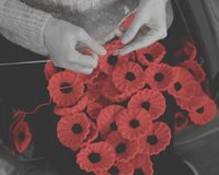 Woman`s Hands Knitting Poppies I for Charity Stock Photography