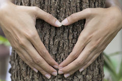 Woman`s hands making a heart shape Stock Photography