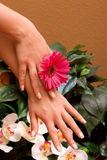Woman's hands with manicure Royalty Free Stock Image