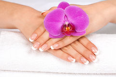Woman's hands with perfect french manicure. Beautiful woman's hands with perfect french manicure decorated with orchid flowers stock photo