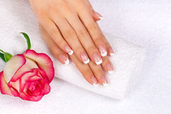 Woman's hands with perfect french manicure. Beautiful woman's hands with french manicure and rose on towel royalty free stock image