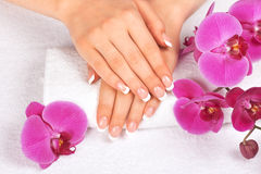 Woman's hands with perfect french manicure. Beautiful woman's hands with perfect french manicure on white towel near orchid flower stock photography