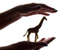 Woman`s hands with rare endangered animal figure - silhouette, protecting animals royalty free stock photography