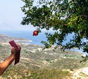 Woman`s hands with red tablet try to take a photo of single red garnet fruit on the tree, with amazing view on sea shore from the stock image