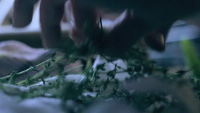 Woman's hands selecting fresh thyme for cooking stock video