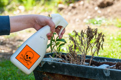 Woman's hands spraying plants Stock Photography