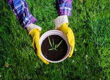 Woman`s hands transplanting a plant into a new pot. Woman`s hands transplanting the plant into a new pot stock images