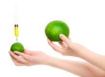 Woman's hands with two citruses Royalty Free Stock Photos