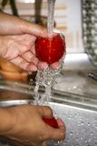 Woman`s hands washing red tomatoes under water stock images