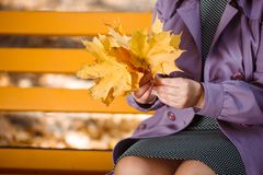 Woman`s hands with yellow and orange leaves bouquet in an autumn park on a blurred background. A young woman in purple coat holds a bouquet of maple yellow stock photography