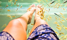 Woman's leg with Fish spa Stock Photography