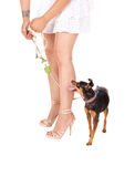 Woman's legs with dog. Royalty Free Stock Image