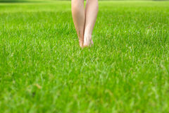Woman's legs green grass Stock Images