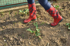 Woman`s Legs in Red Boots in a Garden Royalty Free Stock Photography