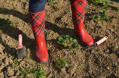 Woman`s Legs in Red Boots on a Soil Stock Photos