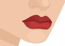 Woman's Lips. Red woman lips graphic illustration Stock Images