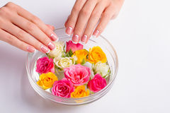 Woman's moon franch manicure. Multicolored roses in the water. Procedure for a spa manicure royalty free stock images