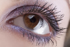 Woman`s open brown eye Royalty Free Stock Images
