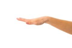 Woman& x27; s ręka z palma puszkiem Zdjęcie Stock