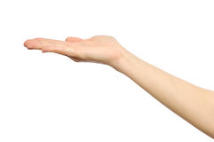 Woman`s stretched hand with open palm. On white royalty free stock image