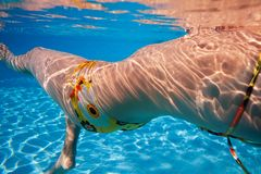 Woman's swimmer body Royalty Free Stock Photo