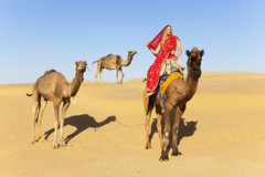 Woman in sari riding a camel. Stock Photo