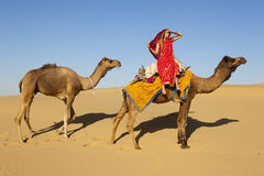 Woman in a sari riding a camel train. Stock Photo