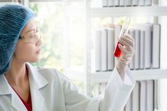 Woman scientist or chemist checking red liquid substance in test tube royalty free stock images