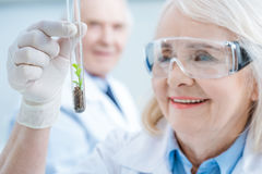 Woman scientist holding green plant in test tube Stock Images