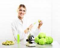Woman scientist injecting cabbage with synthetic substances for growth. GM food Royalty Free Stock Image