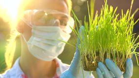Woman scientist in goggles and a mask examines a sample of soil and plants stock video footage
