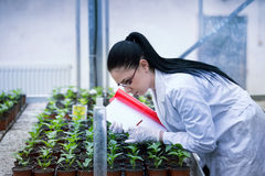Woman scientist taking care of sprouts Stock Images