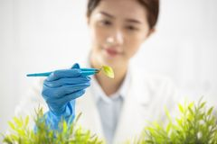 woman scientist watching a plant Royalty Free Stock Photography