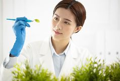Woman scientist watching a plant Royalty Free Stock Image