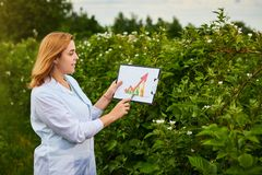 Woman scientist working in fruit garden and shows the level of crop growth using infographics. Biologist inspector examines blackb. Woman scientist working in royalty free stock photos