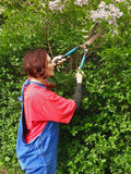 A woman with scissors and the tree lilac. Woman in work clothes with scissors regulates lilac tree. Vertical color photo Royalty Free Stock Photos