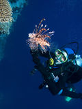 Woman Scuba Diver. And Lionfish stock image