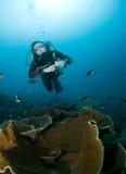 Woman scuba diver Stock Photography