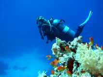 Woman scuba diver Stock Images