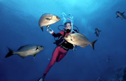 Woman Scuba Diver in Cozumel. Female scuba diver has an encounter with friendly Bermuda Chub as she waits to ascend from her dive in Cozumel, Mexico stock images