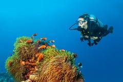 Woman scuba diver exploring claun fish. Woman scuba diver exploring anemons with claun fish. Underwater life stock image