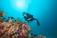 Woman scuba diver exploring sea bottom Royalty Free Stock Images