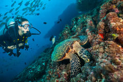 Woman scuba diver exploring sea bottom. Underwater life with beautiful corals and hawksbill turtle Royalty Free Stock Images