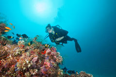 Woman scuba diver exploring sea bottom. Underwater life with beautiful corals and lots of colored fish Royalty Free Stock Images