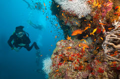 Woman scuba diver exploring sea bottom. Underwater life with beautiful corals and lots of colored fish Royalty Free Stock Image