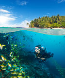 Woman scuba diver exploring sea bottom. Underwater life with beautiful corals and lots of colored fish. Half to half composition Royalty Free Stock Image