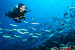 Woman scuba diver exploring sea bottom. Underwater life with beautiful corals and lots of colored fish. Indian ocean, Maldives Stock Photos