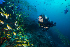 Woman scuba diver exploring sea bottom. Underwater life with beautiful corals and lots of colored fish. Indian ocean, Maldives Stock Photography